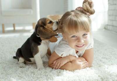 Fun Dog Facts for Kids | Huntersville Vet