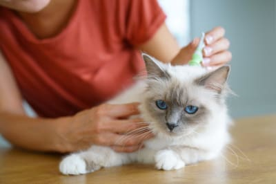 Signs Your Pet May Have Fleas | Huntersville Vet