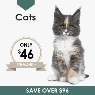 Cats Wellness Plan, LakeCross Veterinary Hospital Huntersville