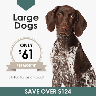 Large Dogs Wellness Plan, LakeCross Veterinary Hospital Huntersville