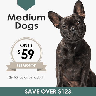 Medium Dogs Wellness Plan, LakeCross Veterinary Hospital Huntersville