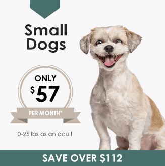 Small Dogs Wellness Plan, LakeCross Veterinary Hospital Huntersville